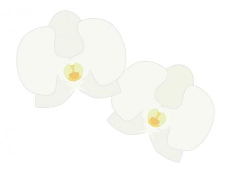 胡蝶蘭のイラスト イラスト無料かわいいテンプレート
