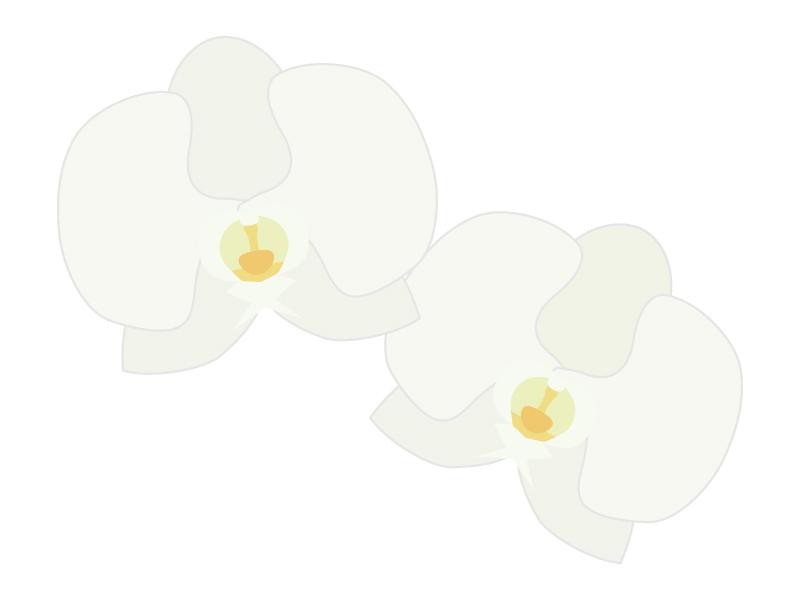 胡蝶蘭のイラスト