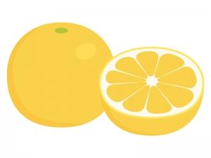 グレープフルーツのイラスト02