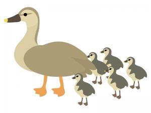 カモ(鴨)の親子のイラスト