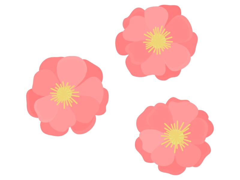 鮮やかな桃の花のイラスト