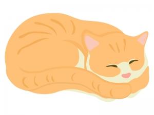 丸まっている猫のイラスト