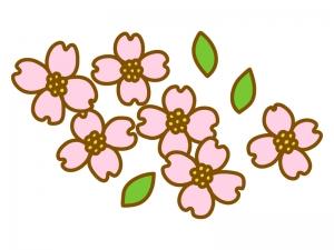 ピンク色のハナミズキのイラスト
