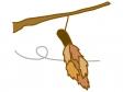 ミノムシ(蓑虫)のイラスト02