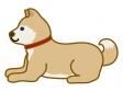 伏せをする柴犬のイラスト