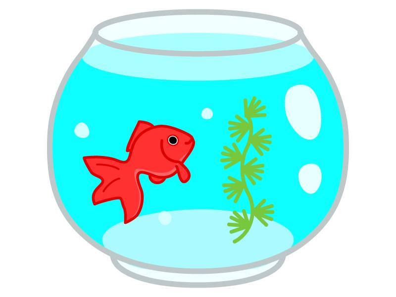 金魚鉢と金魚のイラスト02