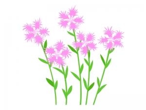 なでしこ(撫子)の花のイラスト02
