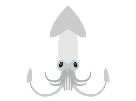 イカ(烏賊)のイラスト02