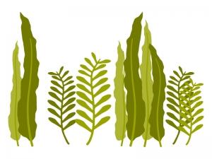 海藻類のイラスト