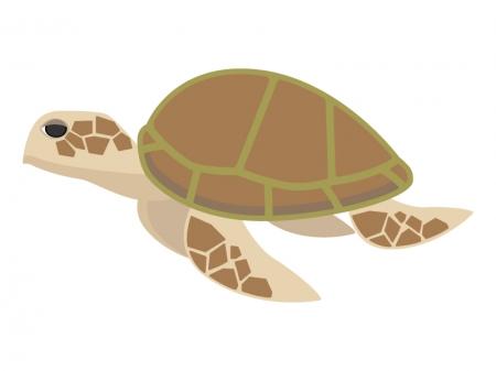 茶色いウミガメのイラスト