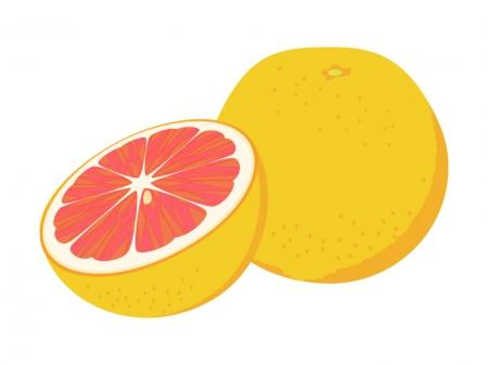 カットしたピンクグレープフルーツのイラスト